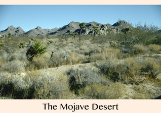 _Pic 1. The Mojave Desert, timthumb.php