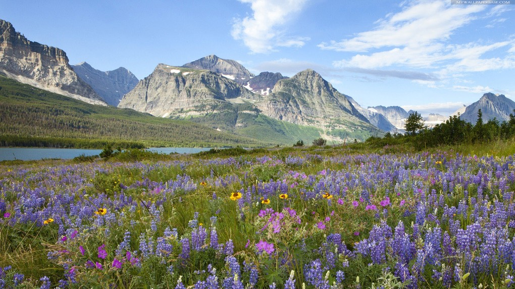 beautiful-mountain-flowers-and-fields-130475